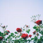 Leven zonder waarom - De mystieke erfenis van een hemelse zwerver