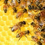 Hoe meditatie werkt - oftewel het verhaal van een bijenkorf